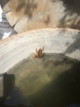 Oops! A little rana or frog which Laura tells me is good for keeping out the bacteria. There is no running water here.